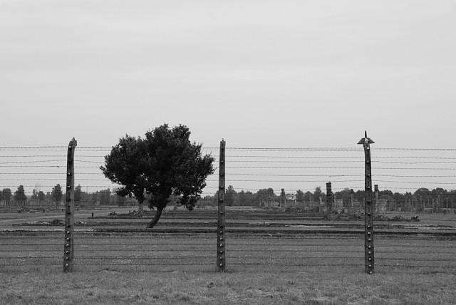Ciò che è stato Un albero sorge all'interno di quella che fu una baracca nel campo di Birkenau II tra fango e fantasmi.