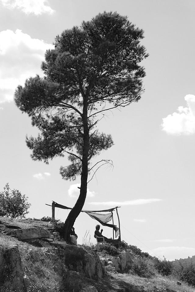 Sulla strada da Rodi a Peschici - Puglia 2013